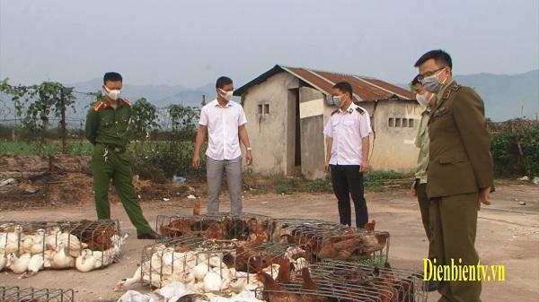 Điện Biên: Tạm giữ 500 kg gia cầm không có giấy kiểm dịch vệ sinh thú y