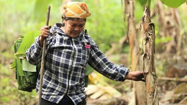 Vượt 20km lên Hòa Bình, người phụ nữ 35 năm hái lá chuối rừng mưu sinh