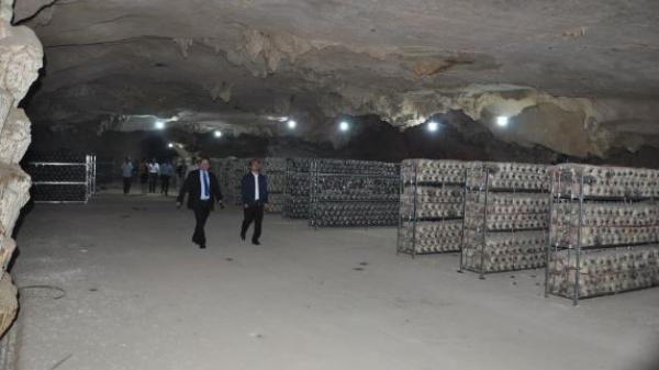 Trang trại nuôi con đặc sản thu gần 7 tỷ đồng/năm ở Hòa Bình, bất ngờ phải đi qua 1 cái hang tối